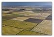 02102007_MG_0942_ Rice_Fields_Aerial.jpg