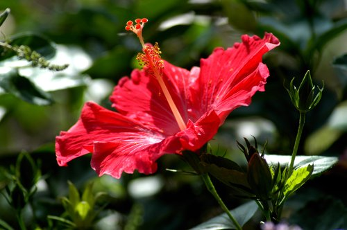 Flora_001.jpg