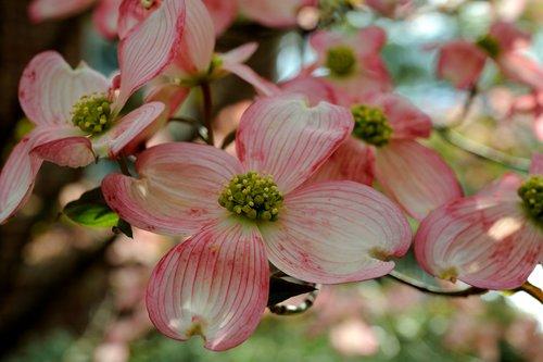 Flora_002.jpg