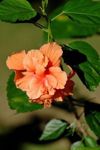 Flora_003.jpg