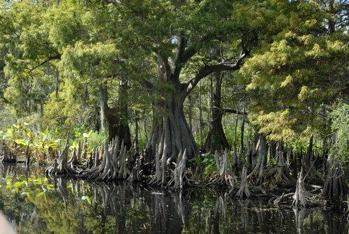 Florida_001.jpg