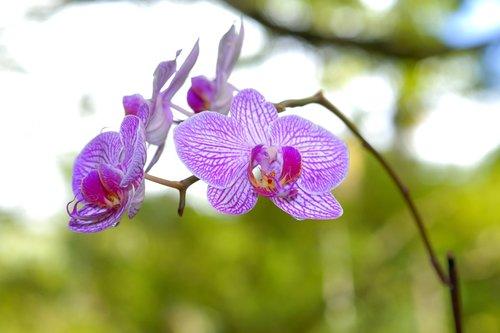 Kauai_004.jpg