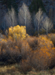 Autumn Aglow Eastern Sierra.jpg
