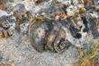 Fossil-1.jpg