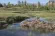 Beaver Dam.jpg