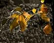 FS - Backlit Leaf.jpg