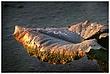 LRF-Leaf Mold.jpg