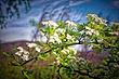 Canoe HDR2 FLOWERS.jpg