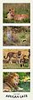 African Cats 25 x 8-5.jpg