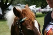 Browband Picture 765.jpg