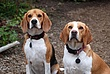 Dexter and Molly 02.jpg