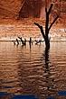 Tree Cemetary.jpg
