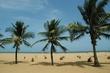 Sri Lanka Palms.jpg