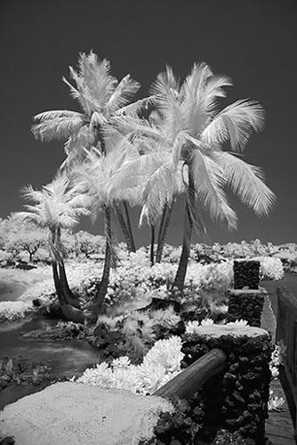 139 - Waikoloa ir112.jpg