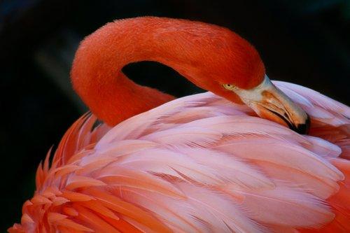 flamingo_0060-6X4.jpg