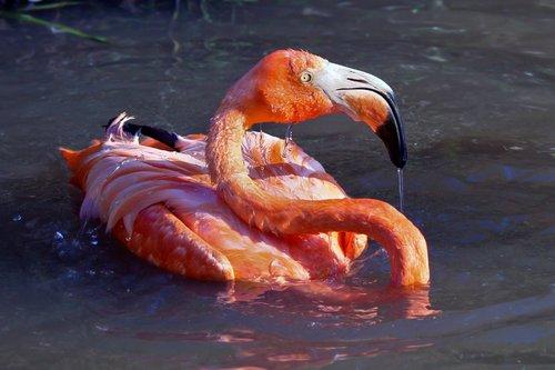 flamingo_0275-4x6sft.jpg