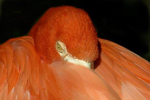 flamingo_1831-6X4X240.jpg