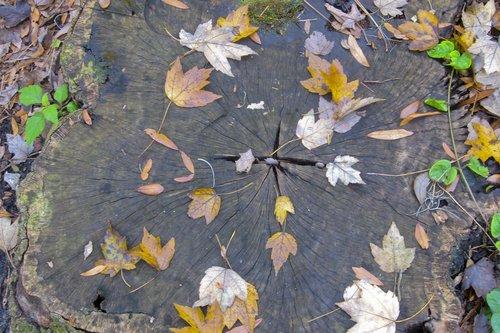 leaves_0750z1.jpg