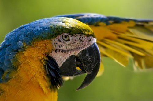 parrot_0681-6X4.jpg