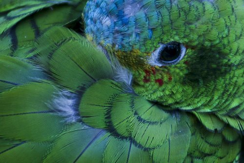 parrot_0945-6X4.jpg