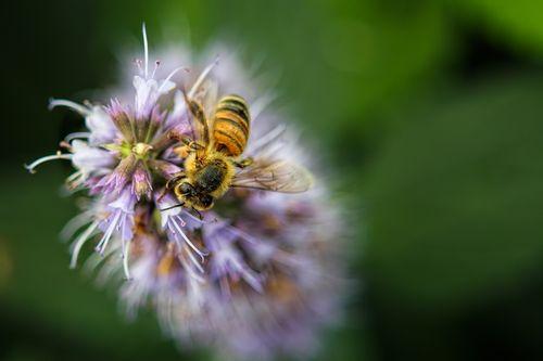 bee-flower_1463-64.jpg