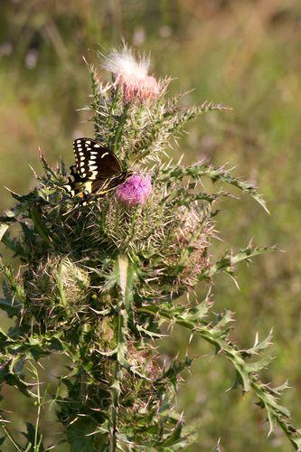 butterfly_2453-46.jpg