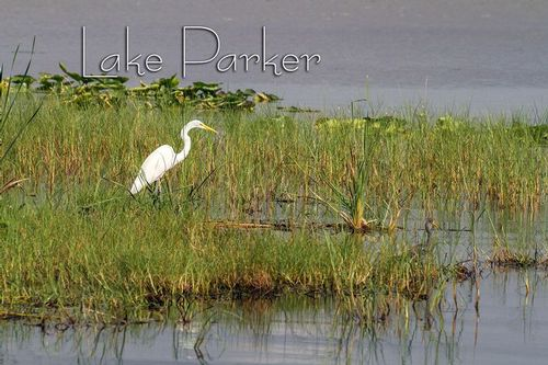 great-egret_9544txt-64.jpg