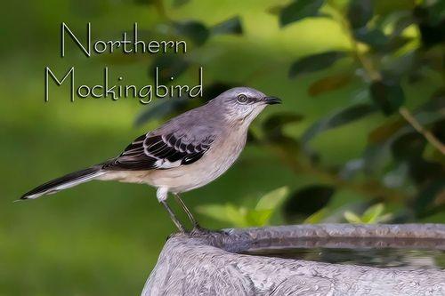 mockingbird_tpz9713txt-64.jpg