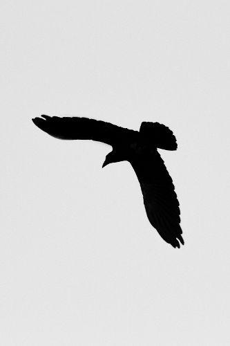 raven_5226bw-46.jpg