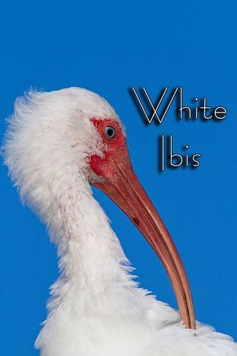 a-ibis_1158txt-46.jpg