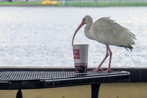 ibis-cup_3296-64.jpg