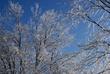 12-12-08 Ice Storm 080 Taken 12-12-08.jpg