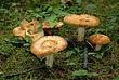 Mushrooms 054 Taken 7-24-08.jpg