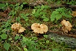 Mushrooms 058 Taken 7-24-08.jpg