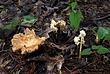 Mushrooms 060 Taken 7-24-08.jpg