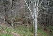 Smoky Mtn Park 0080 Taken 4-27-07.jpg