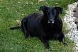 Spencer - Nickys Mentor Taken 10-26-08.jpg