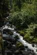 Wahkeena Falls 003 Taken 8-07-08.jpg