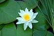 Water Lilies 009 Taken 8-24-08.jpg