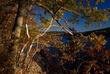 Harriman Reservoir in Wilmington Vermont 275 Taken 10-10-10.jpg