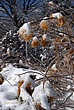 Ice Covered Trees In Clifton Park 042 Taken 3-8-11.jpg
