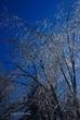 Ice Covered Trees In Clifton Park 067 Taken 3-8-11.jpg