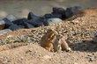 Reston Zoo 2014 (4 of 30).jpg
