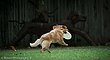 Frisbee-5369.jpg
