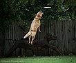 Frisbee-5371.jpg