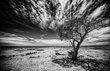 DESERT SKIES.jpg