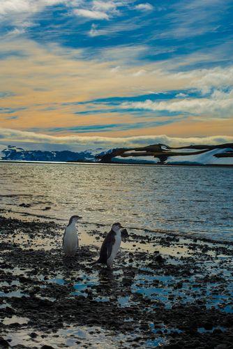 Antartica Early Morning Penguins.jpg