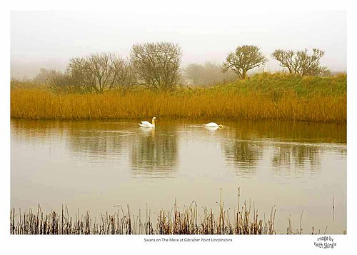 Swans on The Mere.jpg