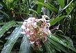 14 Flower 05 CR.jpg