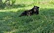 American-Black-Bear-2.jpg